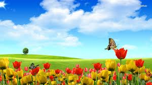 تصاویری از گل های زیبا
