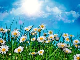 گل های تابستان